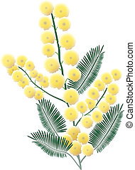 Bunch of mimosa blossoms