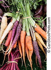 Bunch of multi-colored carrots - Vertical shot of...