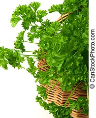 Bunch of parsley, isolated, close-up