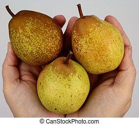 Bunch of pears held in hands