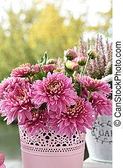 bunch of pink chrysanthemum flowers