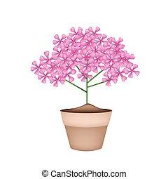 Bunch of Pink Geranium Flowers in A Pot