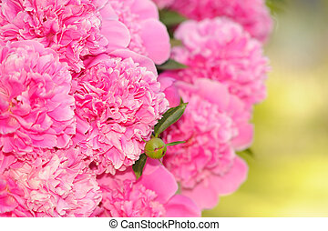 Bunch of Pink Peony Flowers