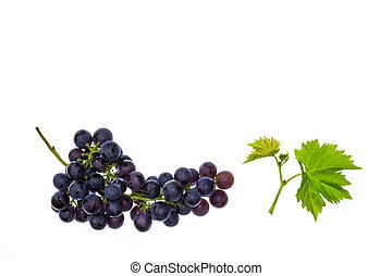 bunch of Pinot Noir grapes with leaves on white background -...