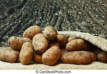 bunch of potatoes on the background of agricultural lands