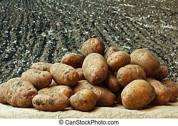 potatoes on the background of agricultural lands - bunch of ...
