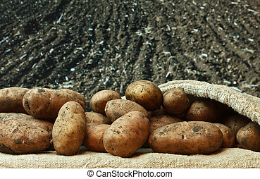 potatoes on the background of agricultural lands - bunch of...