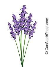 Bunch of Purple Lavender Flowers on A White Background -...