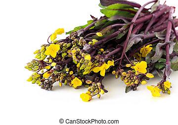 bunch of Purple stem mustard