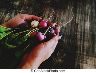 bunch of radishes lies in female hands, selective focus