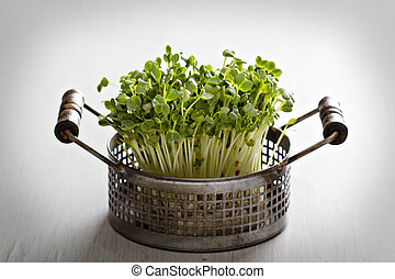 Bunch of radishes microgreens in a metal basket