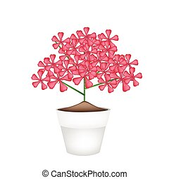 Bunch of Red Geranium Flowers in A Pot