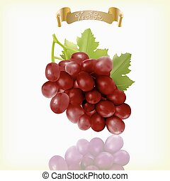 Bunch of red grapes with vine leaves isolated on white background. Realistic, fresh, natural food, dessert.
