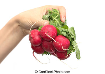 bunch of red radishes in a female hand