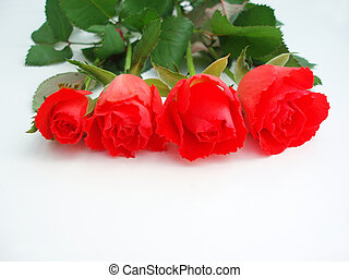 Bunch of red roses on white background
