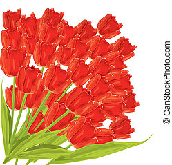 Bunch of red tulips. vector illustration