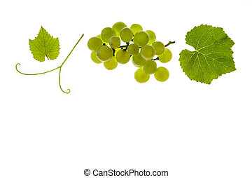 ripe Sauvignon Blanc grapes and leaves isolated on white...