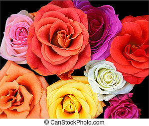Bunch of roses. Vector illustration