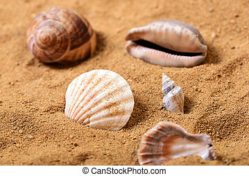 Bunch of sea shells in the sand on a beach