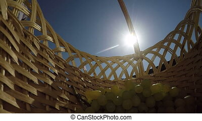 Bunch of seedless sultana white grapes shining in sun rays inside wicker basket