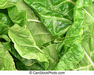 Bunch of Spinach