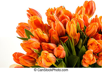 Bunch of spring tulips flowers on white background