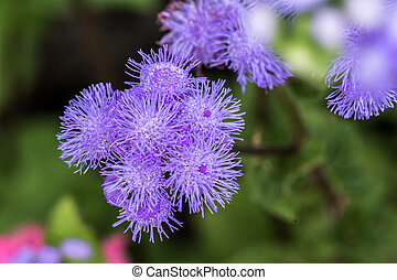 Bunch of thistle flower in summer time