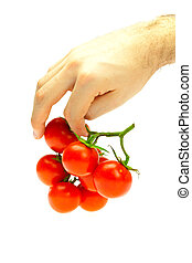 bunch of tomato in your hand man isolated on white