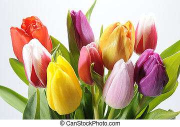 bunch of easter tulips on white background