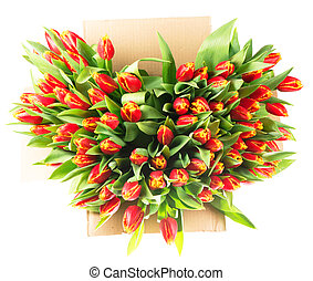 bunch of tulips isolated on white background