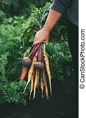 Bunch of vegetables in women's hand. Organic carrots and beets. Healthy food.