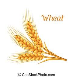 Bunch of wheat, barley or rye ears