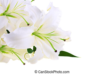 Bunch of white lilies isolated on white background