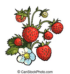 Bunch of wild strawberry, realistic vector drawing