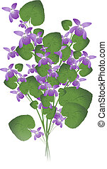 bunch of wild violet over white background