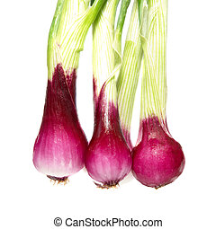 Bunch of young onions