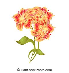 Bunch orange Lily Alstroemeria stem vector.eps - Bunch...