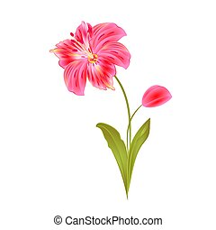 Bunch pink Lily Alstroemeria stem vector.eps - Bunch pink...