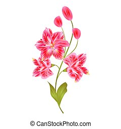 Bunch pink Lily Alstroemeria stem with buds vector.eps -...