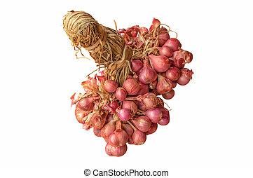 bunch thai onion isolated