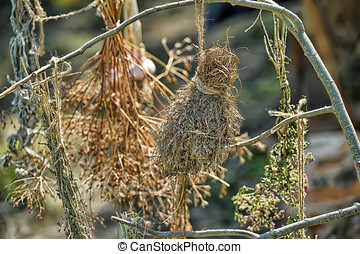 bunches of dried herbs hanging