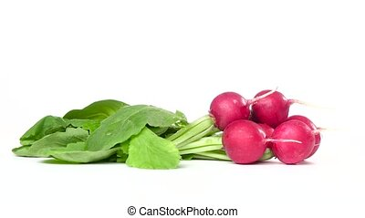 Bunches of freshly cut radishes are spinning on a white...