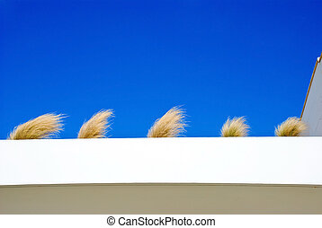 bunches of grass against the sky