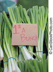Bunches of Green Onions For Sale at the Farmers Market