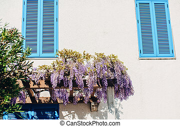 Bunches of lilac wisteria flowers on a wooden arch against the wall of a shuttered house.