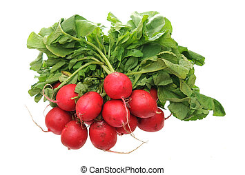 bunches of organic radish isolated on white background