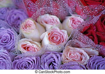 bunches of pink fresh roses and purple roses are around with the droplet
