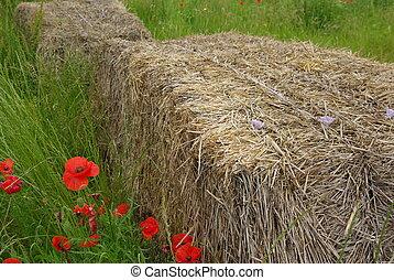 Bundle in a meadow
