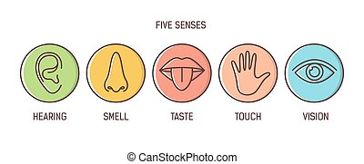Bundle of 5 senses - hearing, smell, taste, touch, vision....