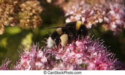 Bundle Of 8 Slow Motion Macro Footage Of Bumblebee On ...